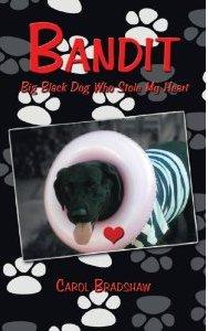 BANDIT Big Black Dog Who Stole My Heart