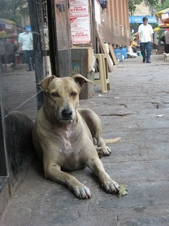 Good Indian dogs